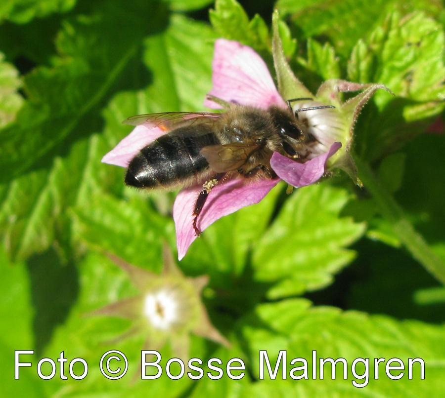 bilder på bin